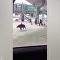 香港警方在机场抓到一头野猪