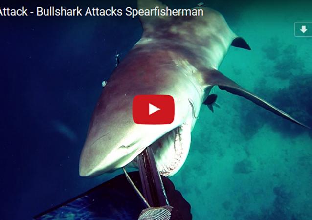 与大鲨鱼的生死博斗