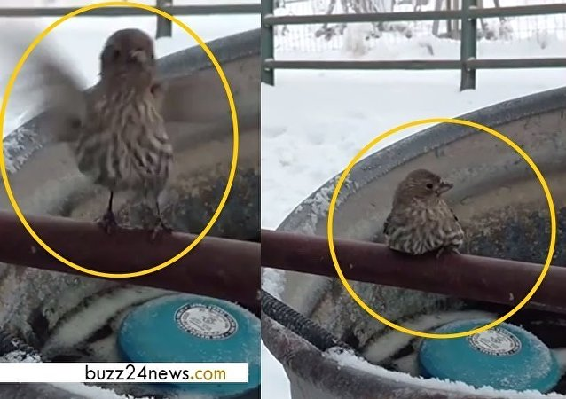 被冻住的小麻雀获暖男搭救