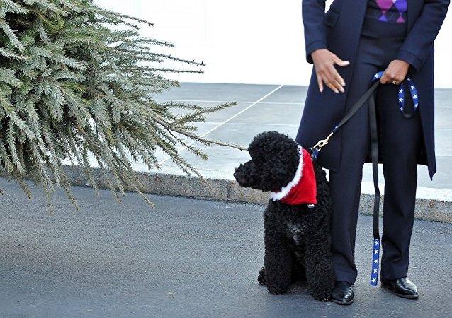 媒体:奥巴马的狗咬伤来白宫做客的女孩