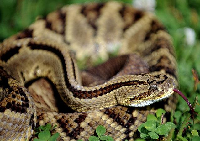 湖南男子在公园放生两条蛇被拘