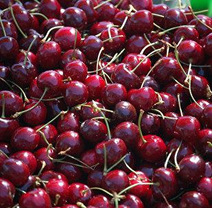 浆果热潮:春节前夕中国从新西兰大量采购樱桃
