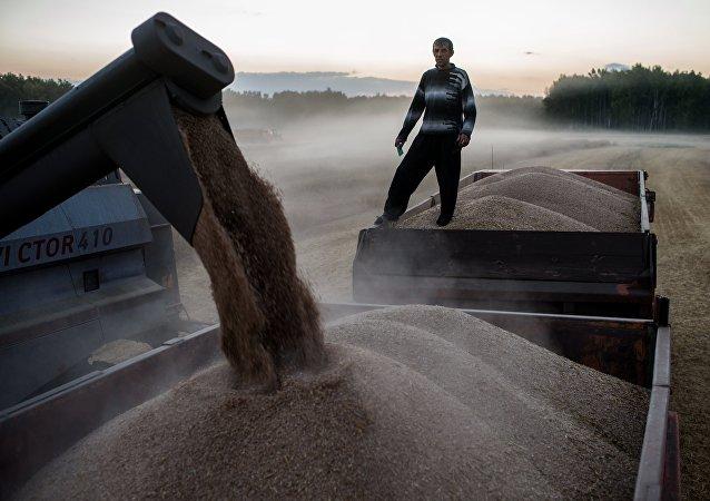 装有第一批小麦的火车已从克拉斯诺达尔边疆区抵达中国