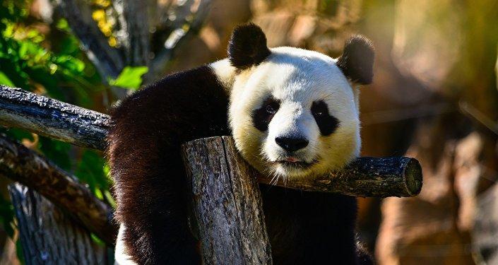 中国人越来越关注动物保护