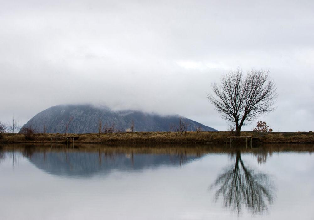 """在""""红石""""村湖岸上的树"""