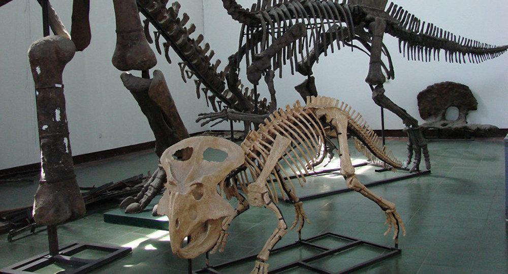 中国,恐龙