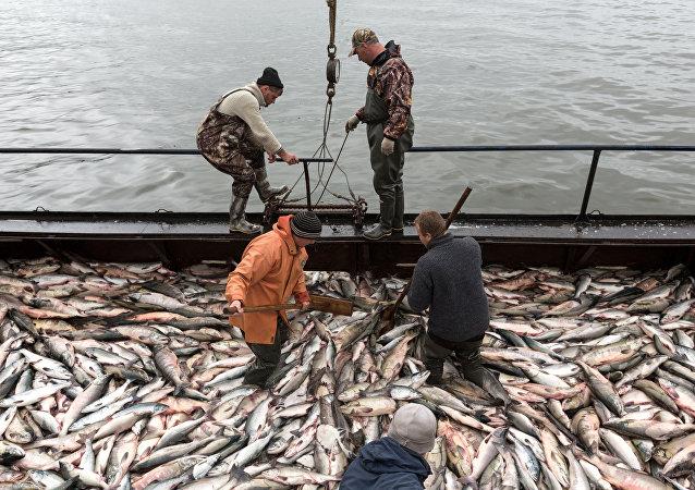 俄罗斯去年渔业形势喜人