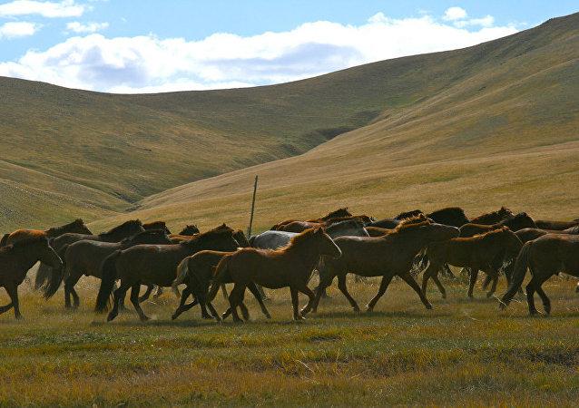 蒙古人捐赠马匹助国家还债