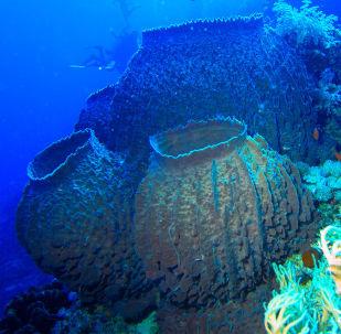 壁纸 海底 海底世界 海洋馆 水族馆 桌面 309_303