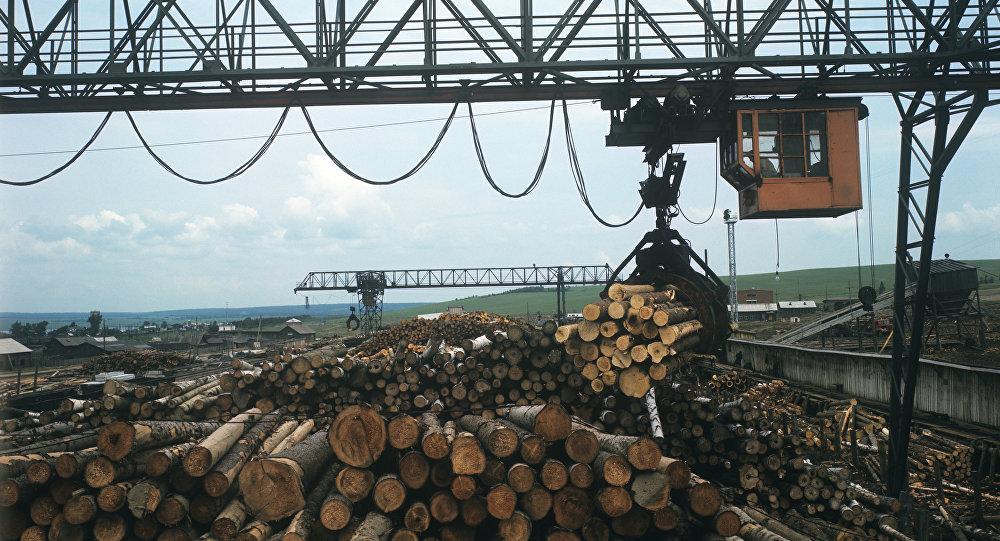 俄副总理下令制定木材加工项目落实监督机制