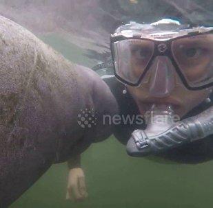 当潜水员遇上海牛