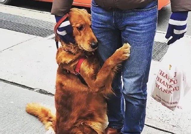 """一只叫""""卢比""""的金毛犬"""