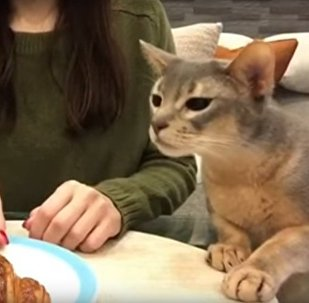 拜托,就把牛角面包给那只小猫吧,求你了!!