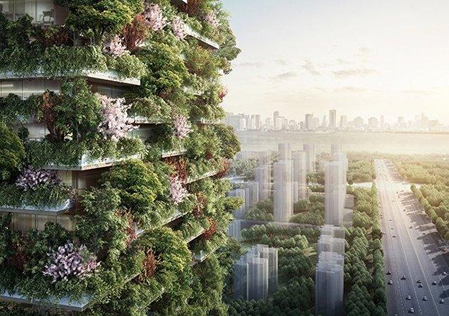 两年后中国将建成森林城市
