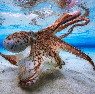 2017水下攝影大賽獲獎作品《舞動的章魚》