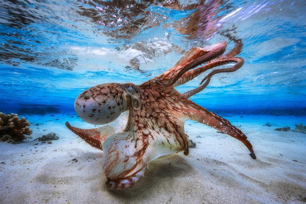 2017水下摄影大赛获奖作品《舞动的章鱼》