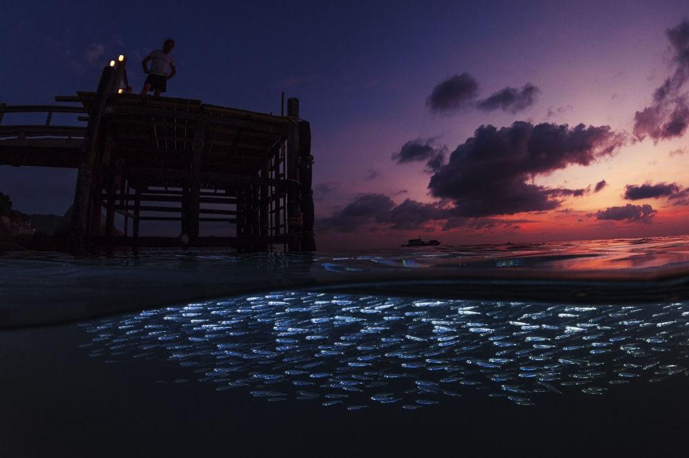 2017水下摄影大赛获奖作品