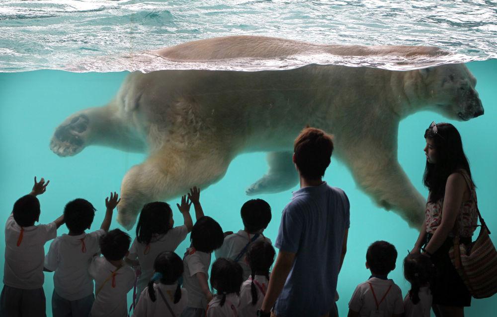 伊努卡(Inuka)是第一只在热带出生的北极熊。