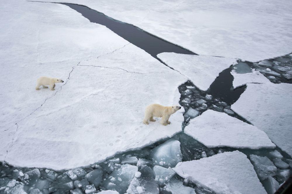 巴伦支海法兰士约瑟夫地群岛地区一只北极熊妈妈带着小北极熊