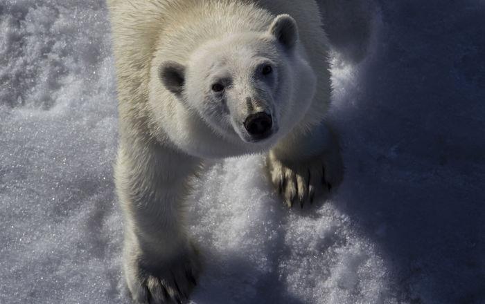 北极的主人