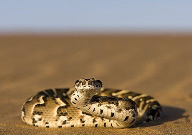 媒体:澳洲两岁萌娃玩蛇照走红网络