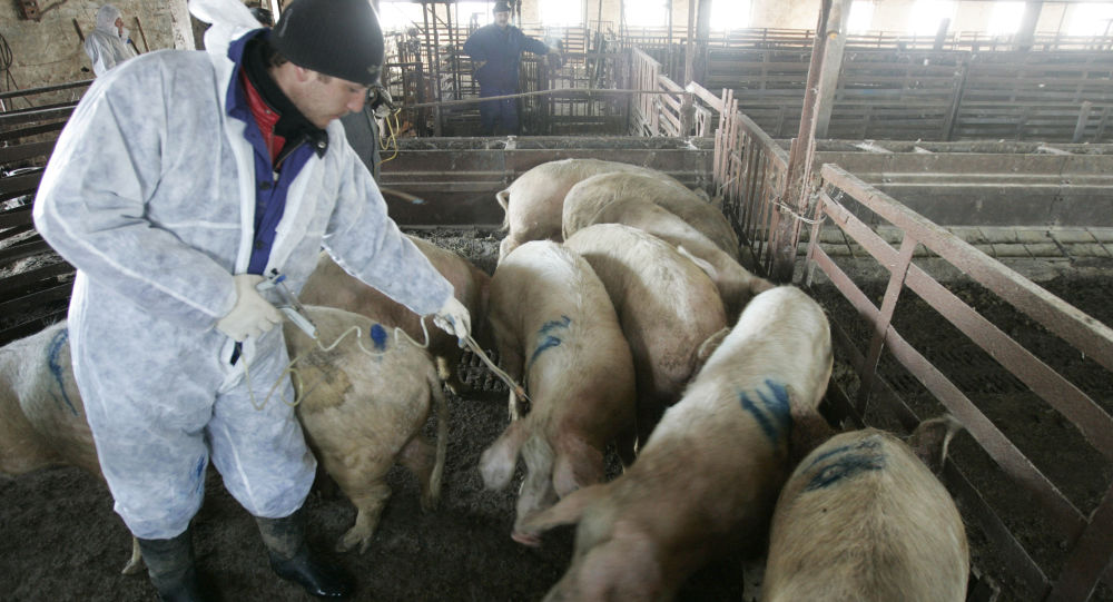 伏尔加格勒州发现第七起非洲猪瘟疫情划定隔离区