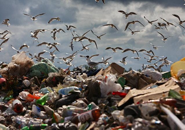 埃塞俄比亚垃圾场滑坡死亡人数升至35人