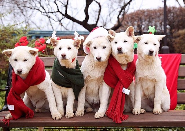韩国总统将9只宠物狗遗留在官邸
