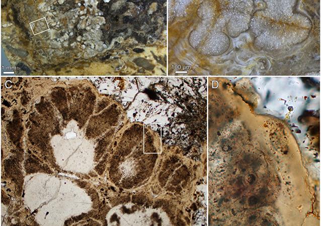 Палеонтологи нашли останки древнейшего растения на Земле