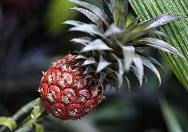 Открытие VII ежегодного фестиваля орхидей, хищных растений и растений пустынь Тропическая зима