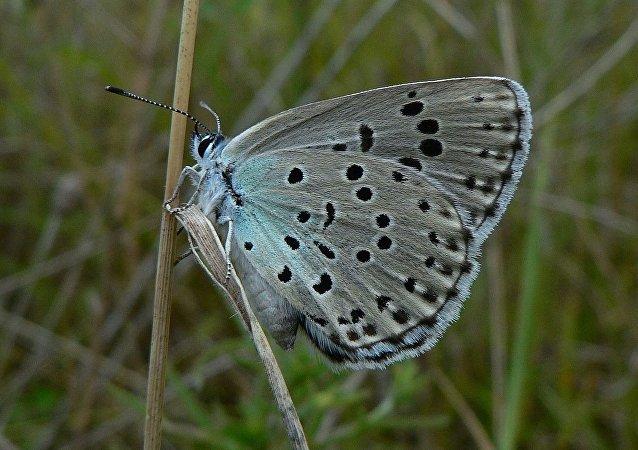 收藏者首次因捕杀珍稀蝴蝶在英国获罪