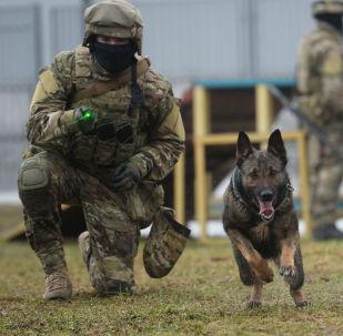 國家近衛軍相關部門進行的犬類培訓