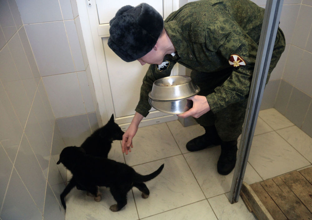 国家近卫军相关部门进行的犬类培训