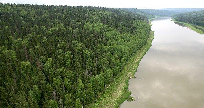 俄专家:中国技术可拯救西伯利亚针叶林