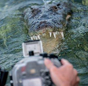 与鳄鱼同游 体验最刺激潜水