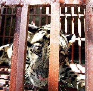 越南對野生動物來說是一個安全國度嗎?