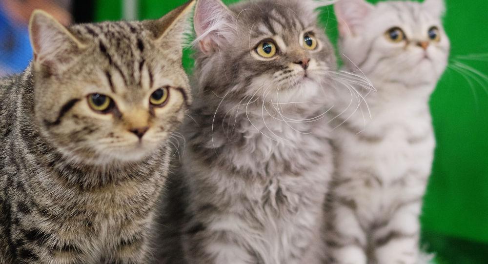 学者们研究并得出结论:猫究竟是如何对待人类的? - 上下四方宇的博客 - 上下四方宇的博客
