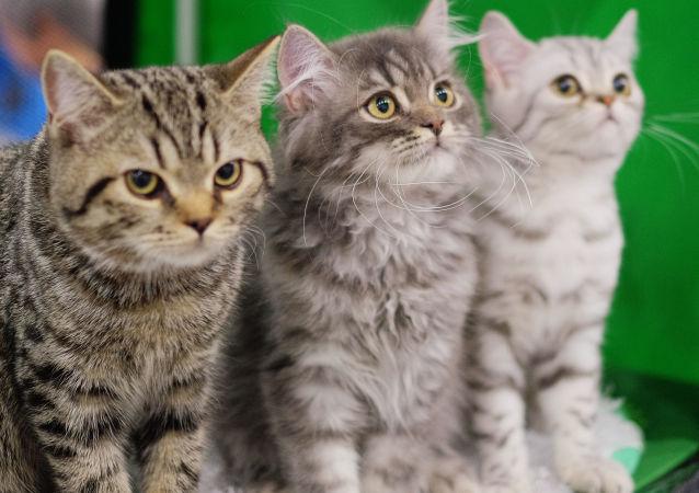爱尔兰一宠物医院新设抱猫师职位