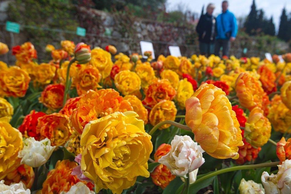 今年,在展会上种植了逾3.7万朵郁金香。