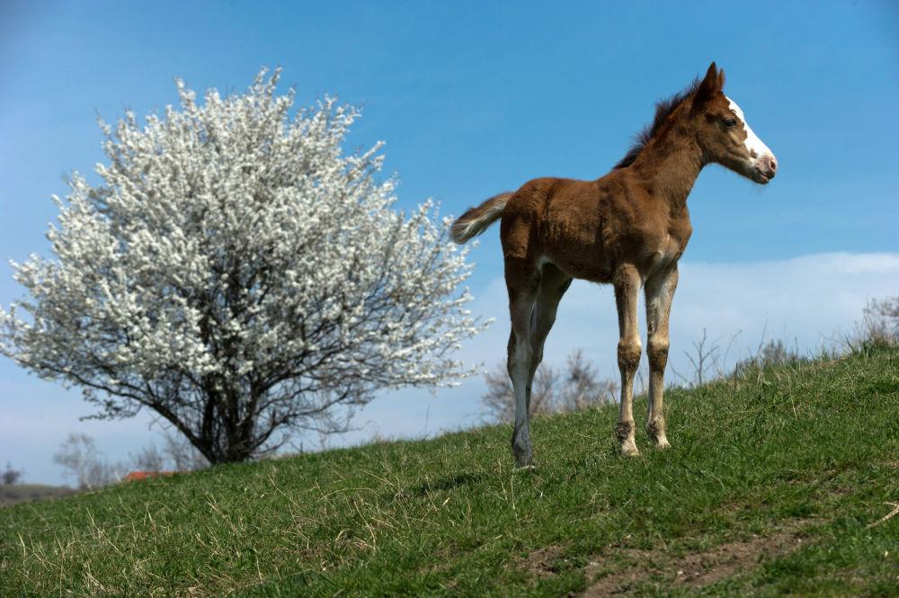 克利诺夫卡镇一头小马驹
