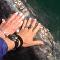 鲸鱼母子求抚摸