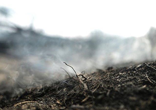 中国企业对俄科米共和国泥炭地开发感兴趣