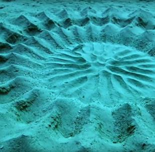 """日本鲀鱼在海底""""搞大工程"""""""