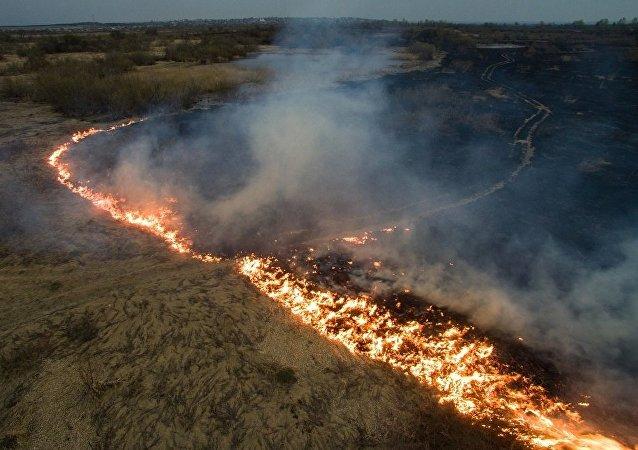 俄远东森林火灾一昼夜毁林超过1.9万公顷