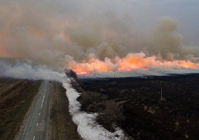 俄远东森林火灾一昼夜毁林1.7万多公顷