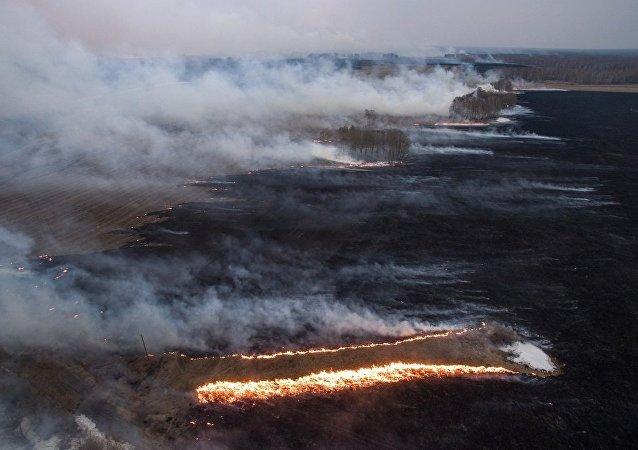 俄萨哈林州和千岛群岛7个地区近日火灾危险性较高