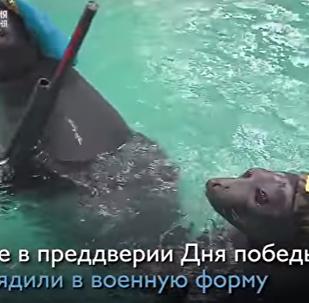 在胜利日到来之际,伊尔库茨克的水族馆为观众们准备了一场特别演出。