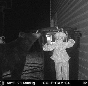 為嚇走覓食熊網友想出這等奇招