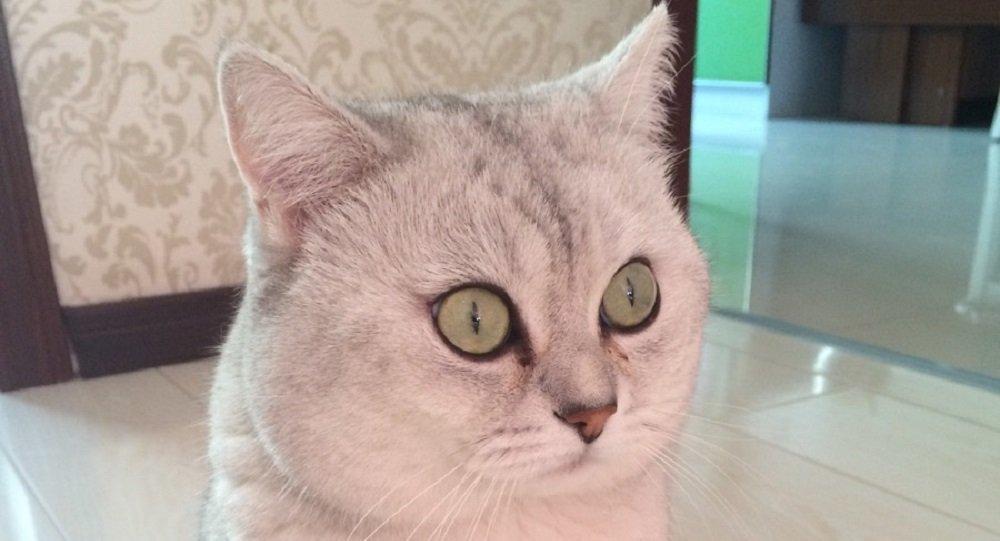 猫和狗谁更聪明?看专家怎么说