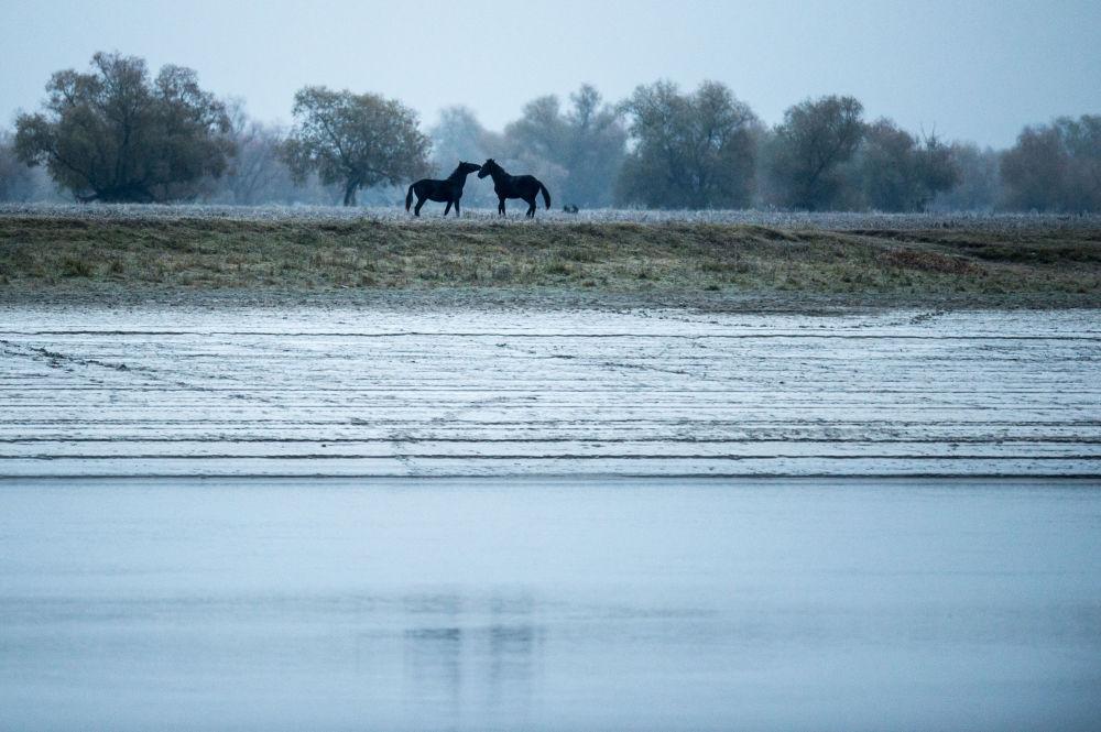 《上学的路》,俄罗斯摄影师阿列克谢·马利加夫科